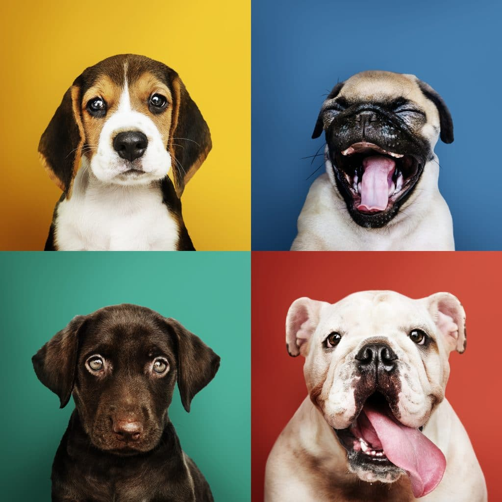 cuadro_caras_perro_diferente_retrato